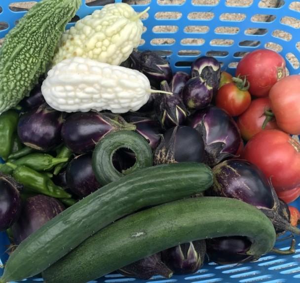 キュウリ、トマト、ナス、ゴーヤ…とれたての野菜。