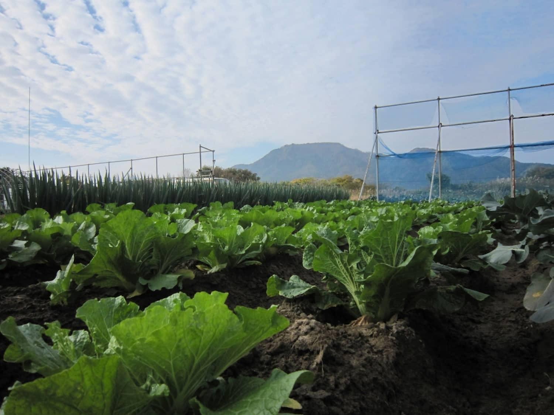 角田山をのぞむ畑が活動場所。